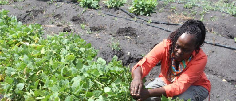 Article : Afrique : l'agriculture innove, le climat s'améliore