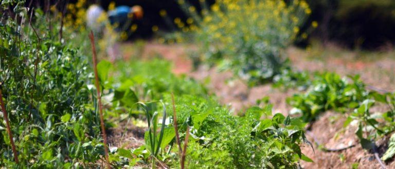 Article : Des paysans malgaches découvrent la permaculture