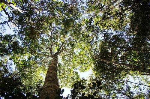 Article : OP500 : « Ensemble, reboisons et sauvons Madagascar »